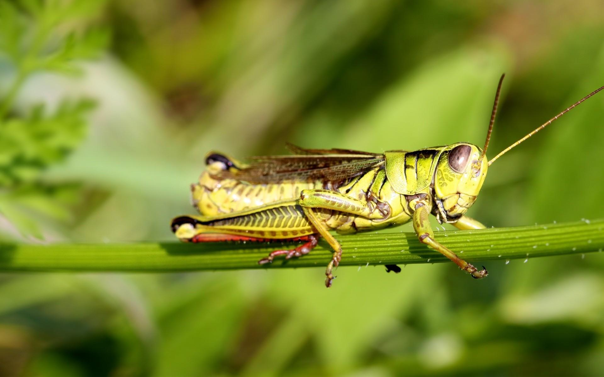 Insectos la comida del futuro - Insectos en casa fotos ...